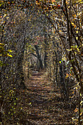 Walk Paths Prints - Woodland Path Print by John Greim