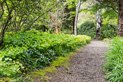 Path Photos - Woodland Pathway by Priya Ghose
