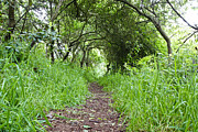 Ambition Photo Metal Prints - Woodland pathway Metal Print by Tom Gowanlock