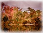 Barry Jones - Woodland Reflections