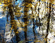 Reflection Of Trees In Water Posters - Woodland Reflections Poster by Shawna  Rowe