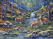 Gail Butler Prints - Woodland Sanctuary Print by Gail Butler