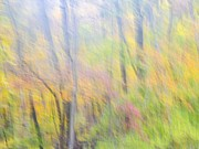 Bernhart Hochleitner Metal Prints - Woodland Splendor I Metal Print by Bernhart Hochleitner