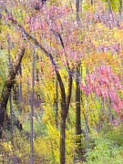 Bernhart Hochleitner Metal Prints - Woodland Splendor II Metal Print by Bernhart Hochleitner