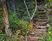 Flight Of Stairs Posters - Woodland Stairs Poster by Julie Magers Soulen
