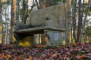 Stone Bench Prints - Woodland Throne Print by Andrew Pacheco