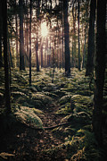 Forest Prints - Woodland Trees Print by Christopher and Amanda Elwell