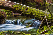 Lakes - Streams - Waterfalls - Woodland Waterfall by Albert Seger