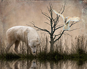 White Dogs Posters - Woodland Wolf reflected Poster by Sharon Lisa Clarke