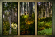 Eco Digital Art - Woodlands - Triptych by Ellen Lacey