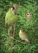 White Flowering Bush Paintings - Woodpecker Owl and Thrush  by Birgitte Hendil