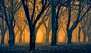 Pastureland Prints - Woods Aglow Print by Don Schwartz