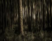Woods Print by Mario Celzner