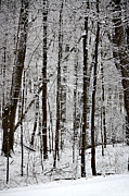 Snowy Night Photo Prints - Woods On a Snowy Night Print by Penny Hunt