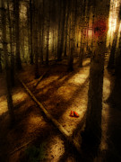 Shadows Photos - Woods With Pine Cones by Meirion Matthias
