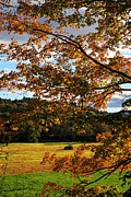 Autumn Foliage Photo Posters - Woodstock Vermont Poster by Edward Fielding