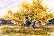 Cottonwood Paintings - Woodward Cottonwood by Sam Sidders