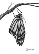 Butterfly Drawings - Words Of A Butterfly by J Ferwerda