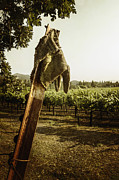 Wine Country Prints - Work Print by Margie Hurwich