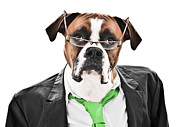 Boxer Dog Framed Prints - Working Like a Dog Framed Print by Jt PhotoDesign