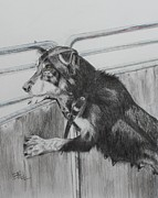 Sheepdog Drawings - Working Mother by Leonie Bell