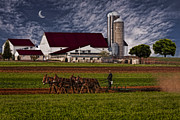 Amish Framed Prints - Working The Fields Framed Print by Susan Candelario