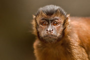 Primates Prints - World of My Own Print by Ashley Vincent