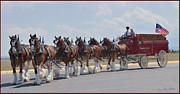 Budweiser Photos - World Renown Clydesdales 2 by Kae Cheatham