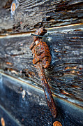 Monkey Photos - Wrenched and Rusted by Peter Tellone