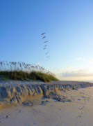 Sea Oats Prints - Wrightsville Beach Print by JC Findley