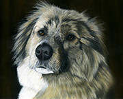 Dog Print Pastels Framed Prints - Wylie Rescued from Afghanistan Framed Print by Sarah Dowson