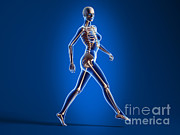 Human Skeleton Art - X-ray View Of A Naked Woman Walking by Leonello Calvetti