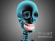 Frontal Bones Digital Art Posters - X-ray View Of Human Skeleton Showing Poster by Stocktrek Images