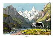 Yak Drawings Posters - Yak Poster by Splendid Art Prints