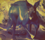 Kangaroo Digital Art Framed Prints - Yamuti Framed Print by Devalyn Marshall