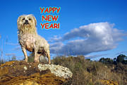 Helen Akerstrom Photography - Yappy New Year