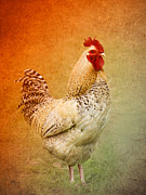 Chicken Digital Art Posters - Yard Boss #2 Poster by Betty LaRue
