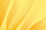 Exture Prints - Yellow Abstract 2 Print by Olaf Protze
