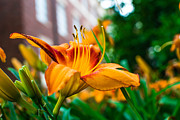 Campus Art - Yellow and Orange Flower by Nathan Hillis