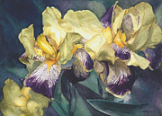 Irises Art - Yellow and purple streaked irises by Greta Corens