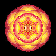 Yellow And Red Rose IIi Flower Mandala Print by David J Bookbinder