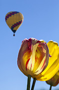 JPLDesigns - Yellow and Red Tulips...
