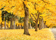 Autumn Trees Prints - Yellow Autumn Wonderland Print by Carol Groenen