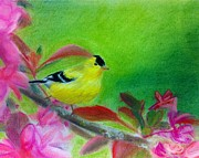 Tiffany Albright - Yellow bird