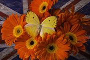 Garry Gay - Yellow Butterfly Among...