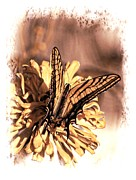Blooms  Butterflies Framed Prints - Yellow Butterfly Framed Print by James Lindstrom
