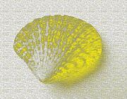Yellow Print by Carol Lynch