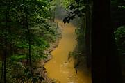 Yellow Cedar Sink Creek Print by Stacie Siemsen