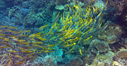 Tropical Fish Photo Posters - Yellow Poster by Corinne Rhode