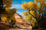 Red Leaves Photos - Yellow Cottonwoods and Dry Wash Zion National Park Utah by Robert Ford